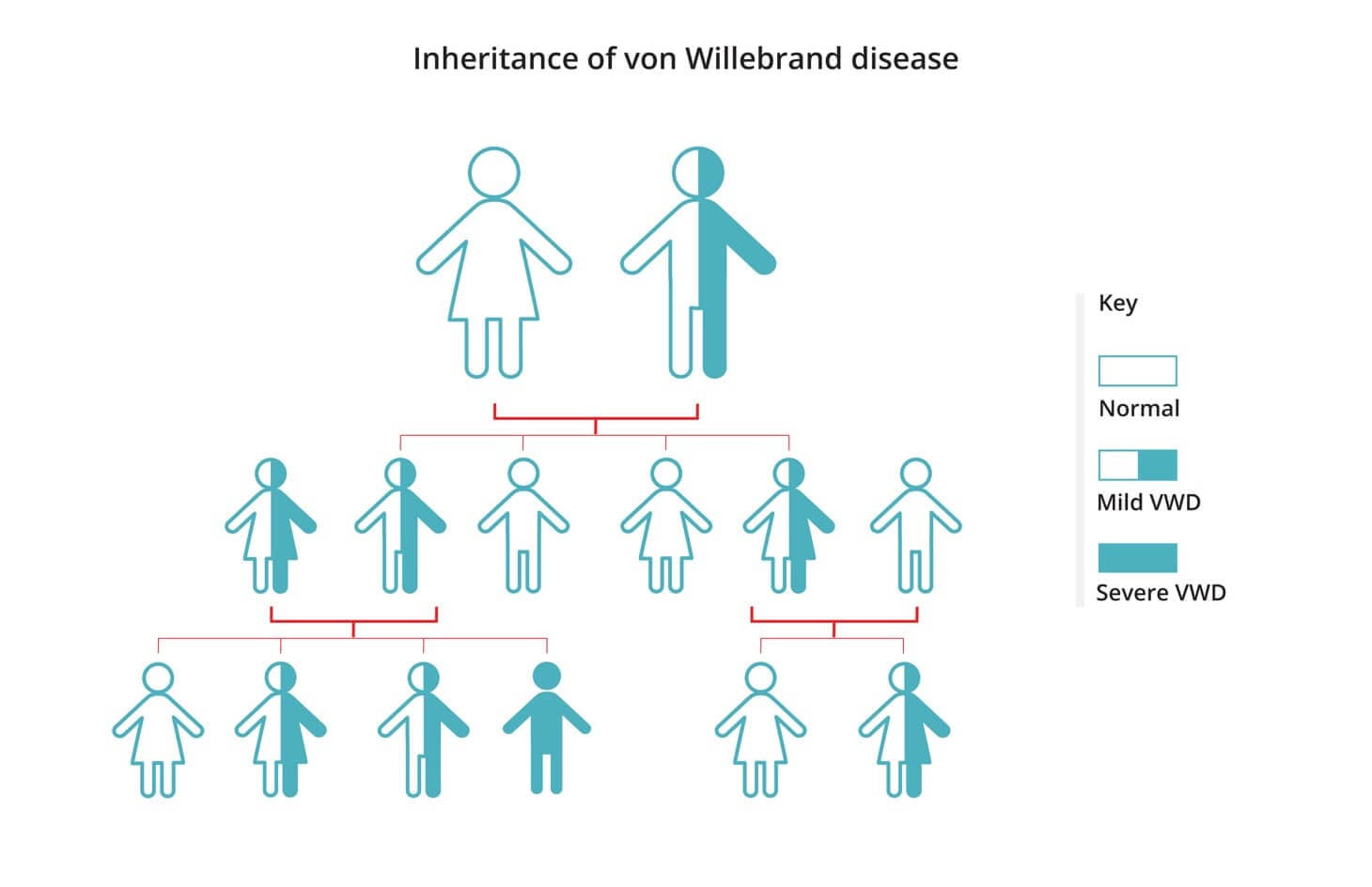 Diagram showing how the mutated VWD gene could be inherited